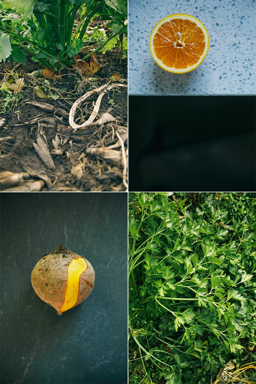 4 photos showing different types of produce, either in an indoor setting or in the garden.