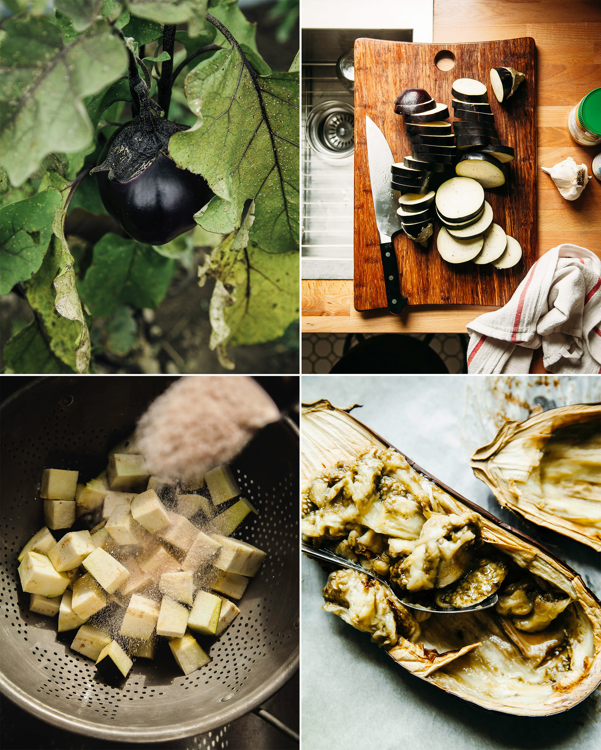 Four images in a grid show the following: eggplant growing from a plant in a garden, slices of eggplant on a cutting board, cubes of eggplant being sprinkled with salt, and a cooked eggplant half being scooped out with a spoon.