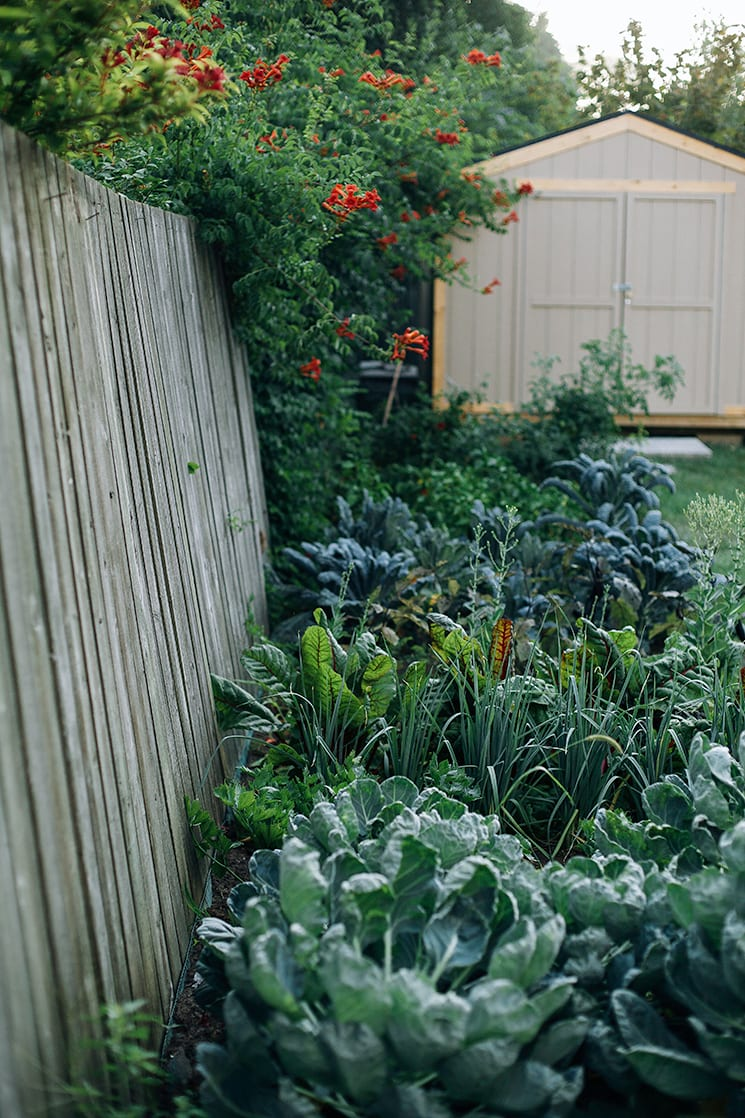 my wild vegetable patch // via thefirstmess.com