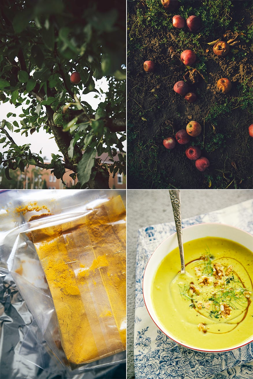 4 photos: one of an apple tree up close, one of fallen spoiled apples in the dirt, one of a package of turmeric, and one of a bowl of fennel walnut soup.