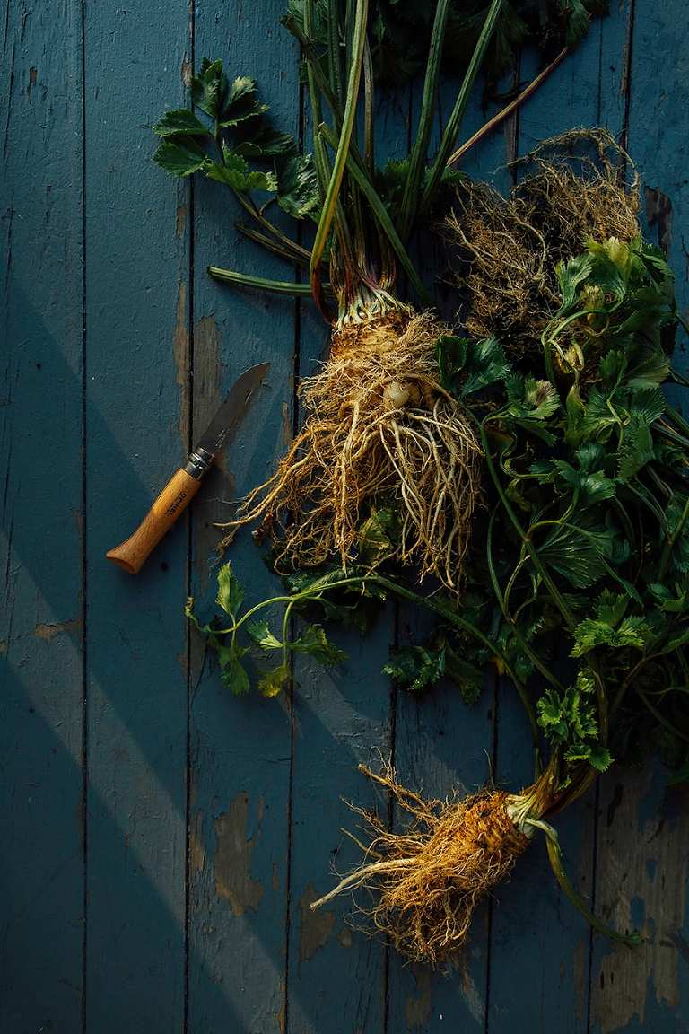 gnarly celery roots // @thefirstmess
