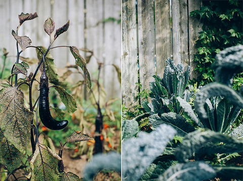 eggplant and kale in my messy garden // thefirstmess.com