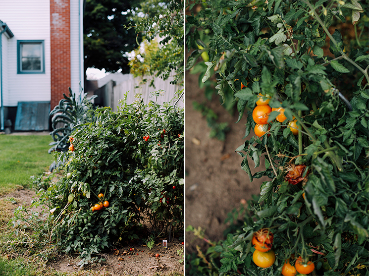 my yellow tomatoes // via thefirstmess.com