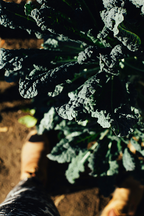 Kale picking for a Broccoli Rabe + Kale Harvest Salad // via thefirstmess.com #broccolirabe